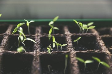plant-1474807_640.jpg