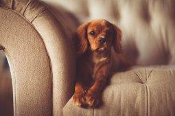 adorable-1866530_640