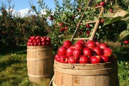 orchard-1872997_640 (1)