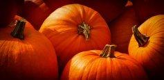 pumpkins-3726919_640